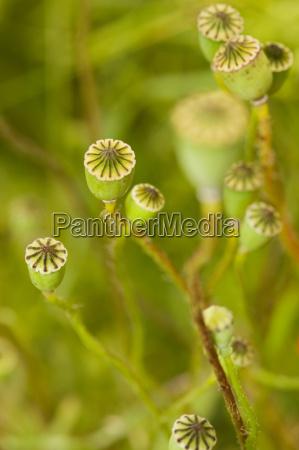 detalhe flor planta botanica bavaria ternura