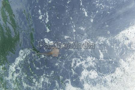 animal espanha agua mediterranico agua salgada