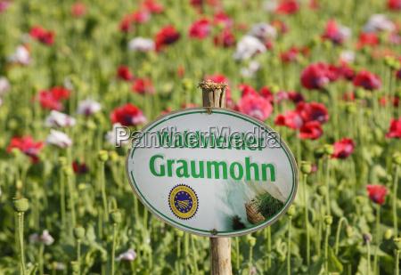 escrever flor planta agricultura campo austria
