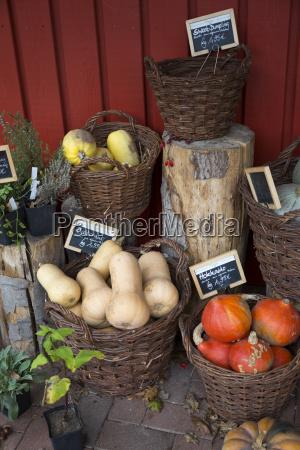 vegetais organicos misturados em cestas de