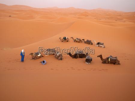 pessoas povo homem relaxamento camelo mentira