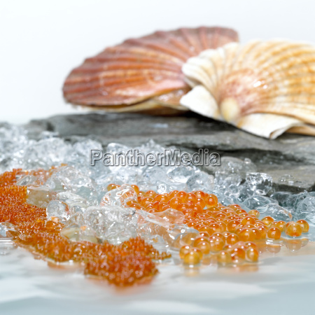 pedra frio frescura gourmet frutos do