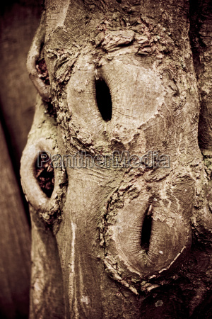 natureza morta close up detalhe ambiente