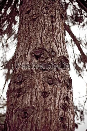 close up detalhe ambiente arvore madeira