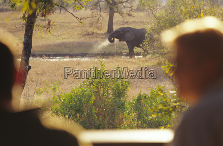 beber bebida elefante horizontalmente ao ar
