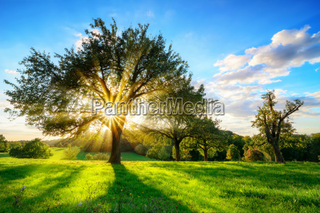 sun is shining through a tree