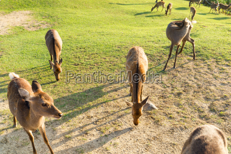 alimento feminino parque jardim animal mamifero