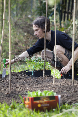 mann gardening in allotment
