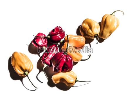 natureza morta laranja alimento pimenta doce