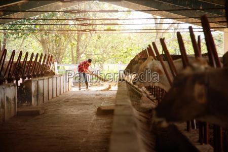 homem limpeza fazenda agricultor varrendo estabulos