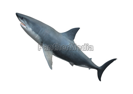 liberado morte animal selvagem peixe apontador