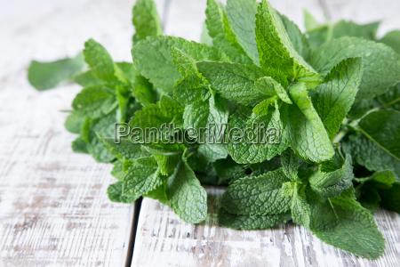 hortela grupo da folha organica verde