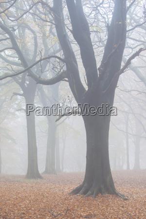 subdued autumn colour through thick mist