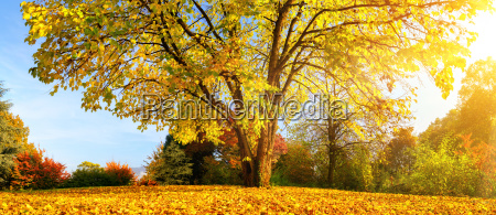 beautiful tree on a sunny autumn