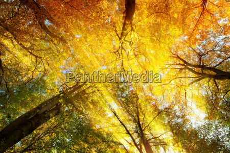 colorful canopy with warm sun rays