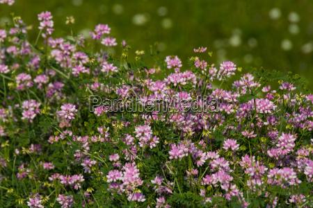 blomstrende planter