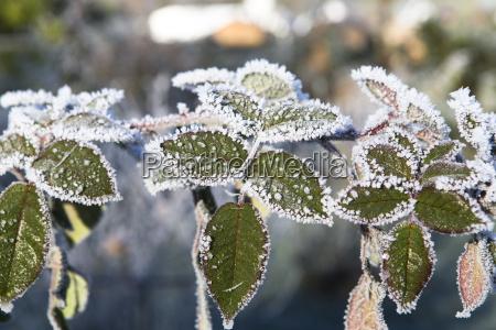 inverno folhas congelado queda de neve