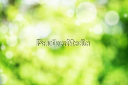 fundo do bokeh brilhante verde abstrato