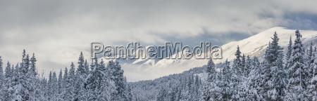 arvore montanhas inverno nuvem de neve