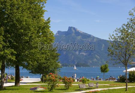 passeio viajar arvore turismo verao austria