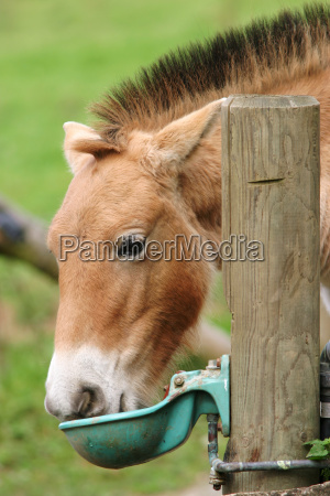 beber bebida cavalo animal mamifero animais