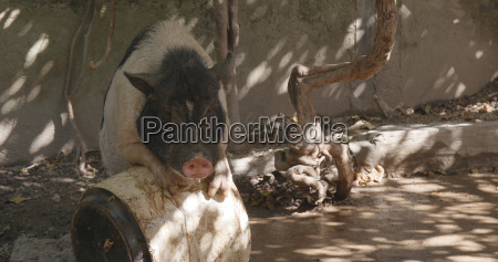 alimento jogo desempenha jogar animal mamifero