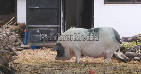 alimento dentro industria industrial animal mamifero
