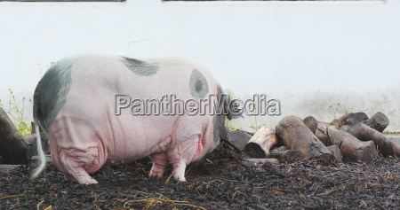 alimento industria animal mamifero agricultura ver