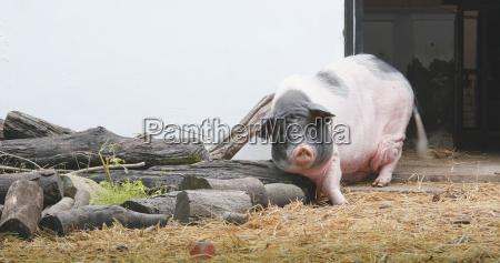 alimento industria animal mamifero animais agricultura