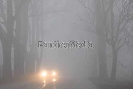 arvore arvores nevoeiro carro veiculo transporte