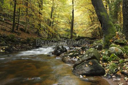 arbol arboles aguas caucasico europeo europa