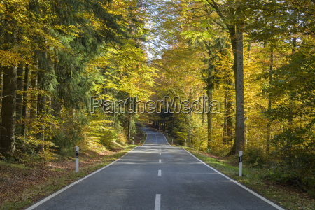 forest road in autumn at spiegelau