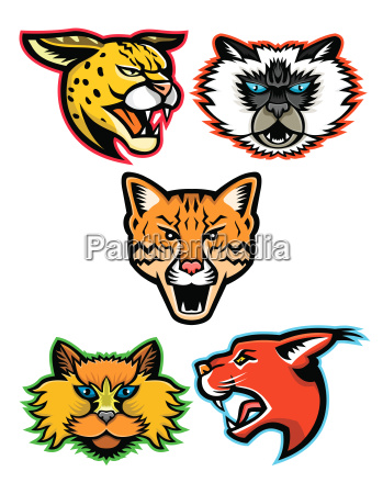 wild and domestic cats collection series