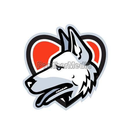 german shepherd dog heart