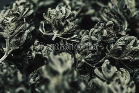 natureza morta folha close up horizontalmente