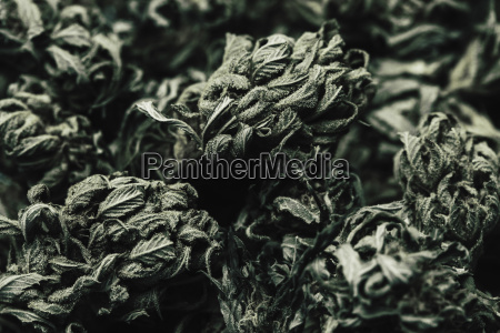 natureza morta folha horizontalmente fotografia foto