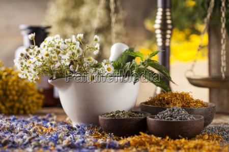 existir vida closeup flor planta pele