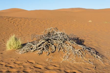 deserto africa namibia vistas vista aridez