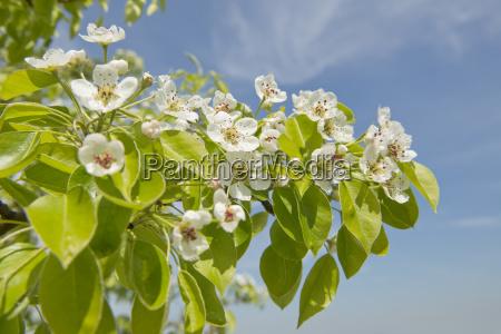 detalhe closeup flor lindas flores inflorescencia