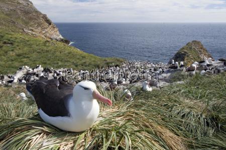 animal animais vistas vista atlantico agua