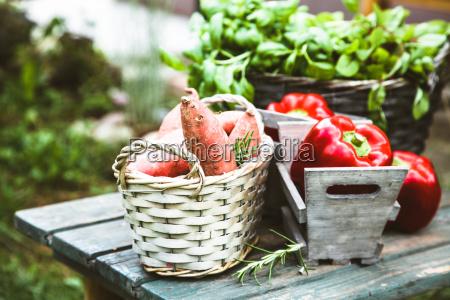 alimento pimenta folha saude jardim espaco