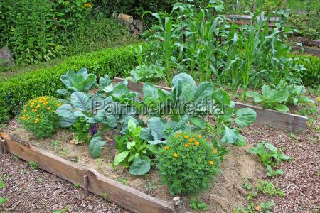 alimento jardim planta implantado planta util