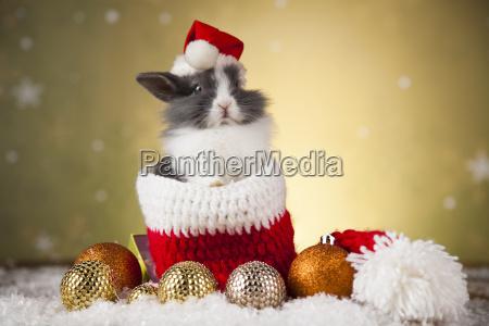 animal rabbit bunny on christmas background