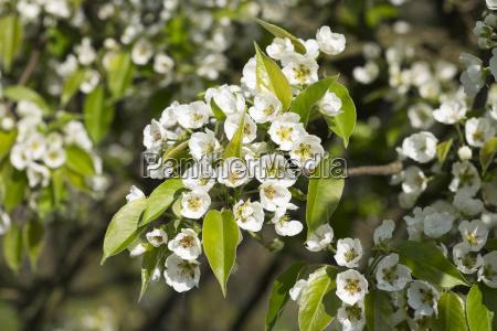 agricola agricultura detalhe closeup flor lindas