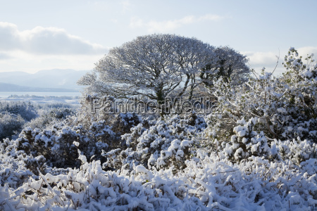 azul arbol arboles montanyas invierno nube