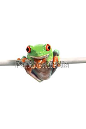 close up cor closeup arvore animal
