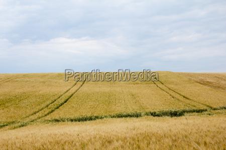 cornfields com pistas e horizonte em