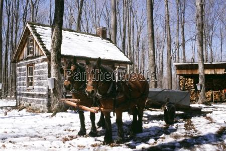 inverno de neve cavalo cavalos canada