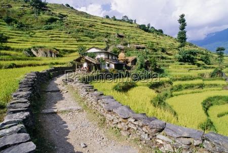 path through terraced fields annapurna region