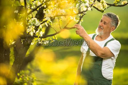 aposentadoria primavera jardinagem pomar homem pessoa